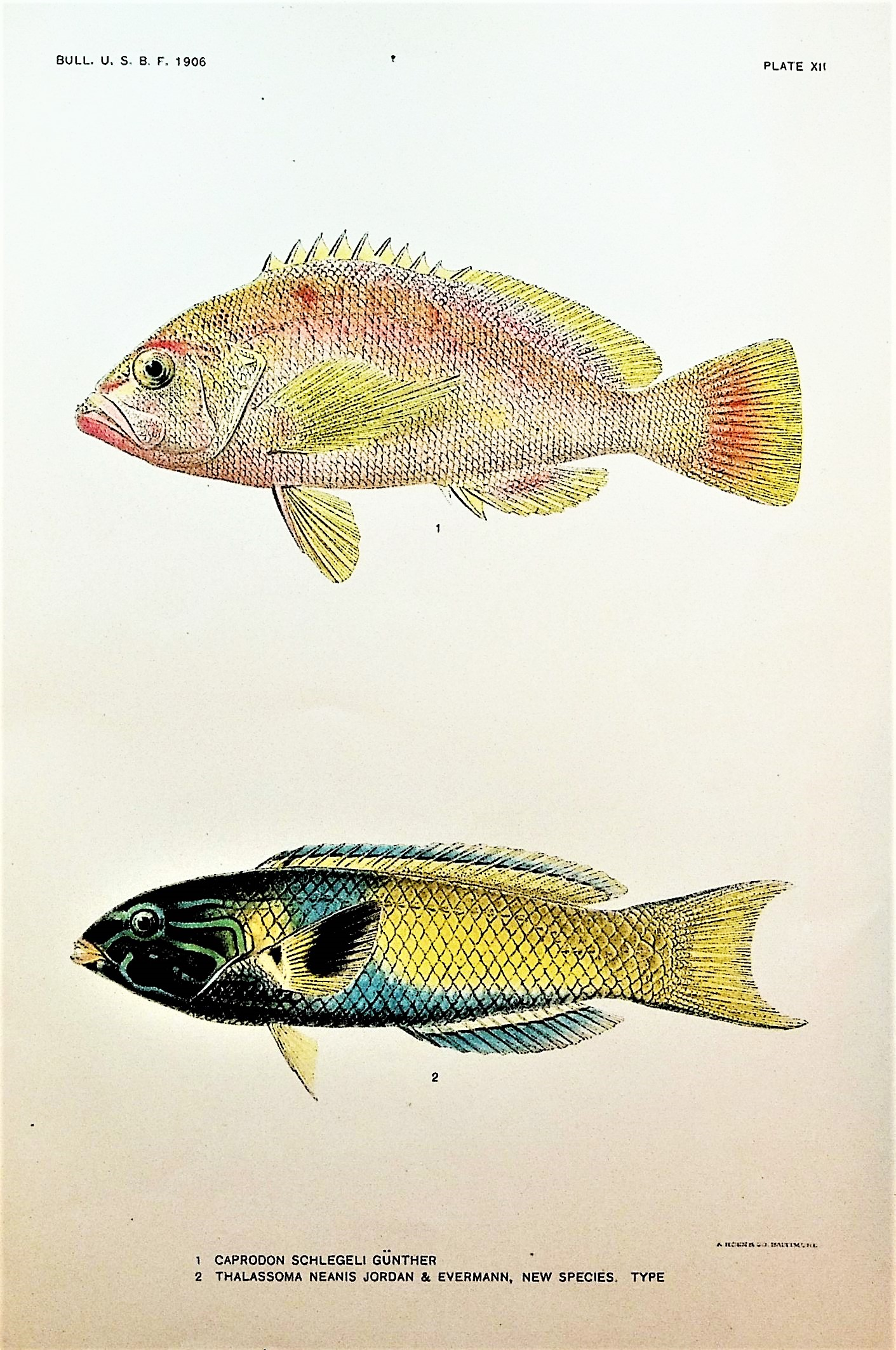 Image for A collection of offprints on the biology and classification of fishes