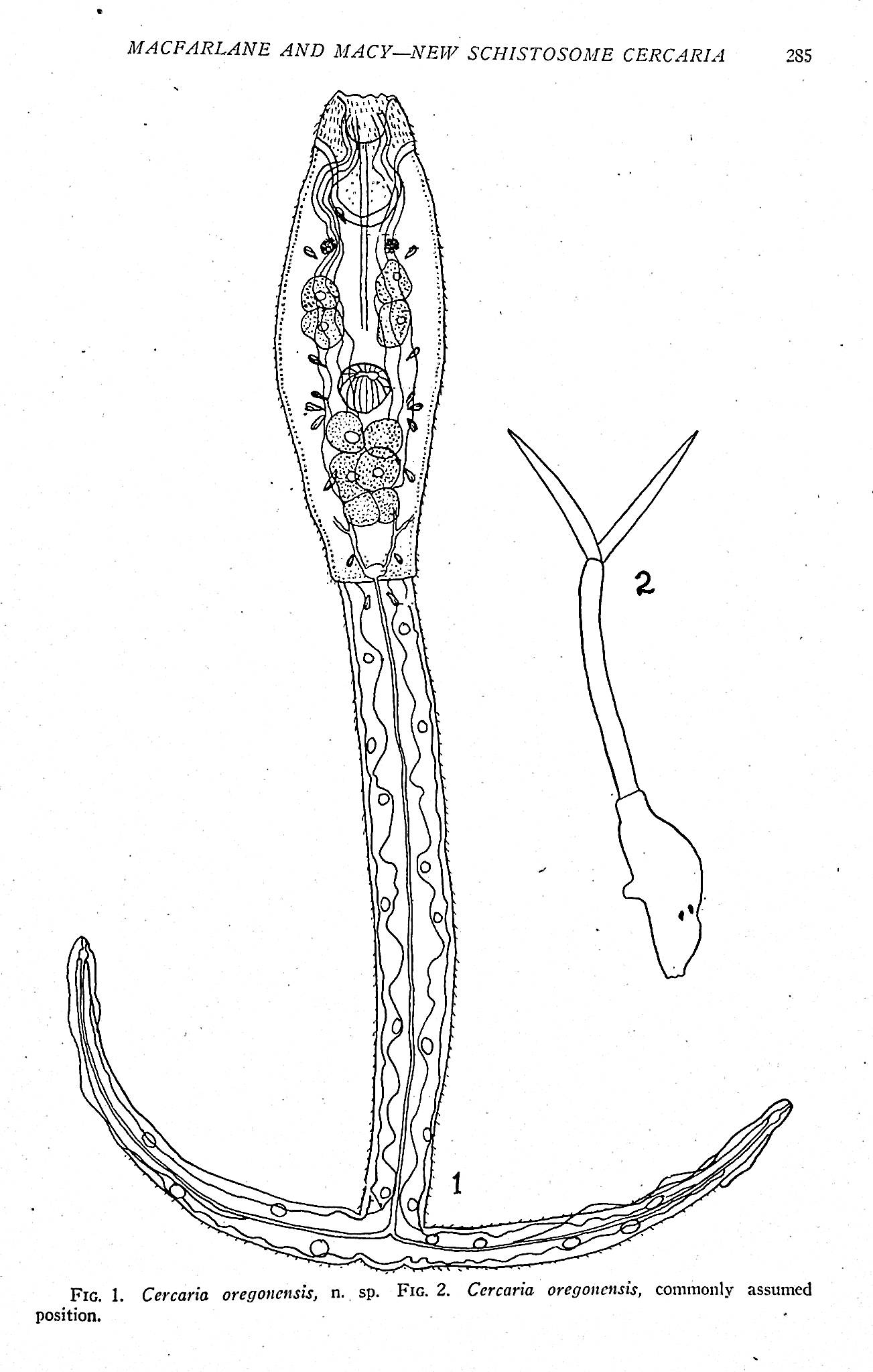 Image for Collection of 70 offprints on trematodes