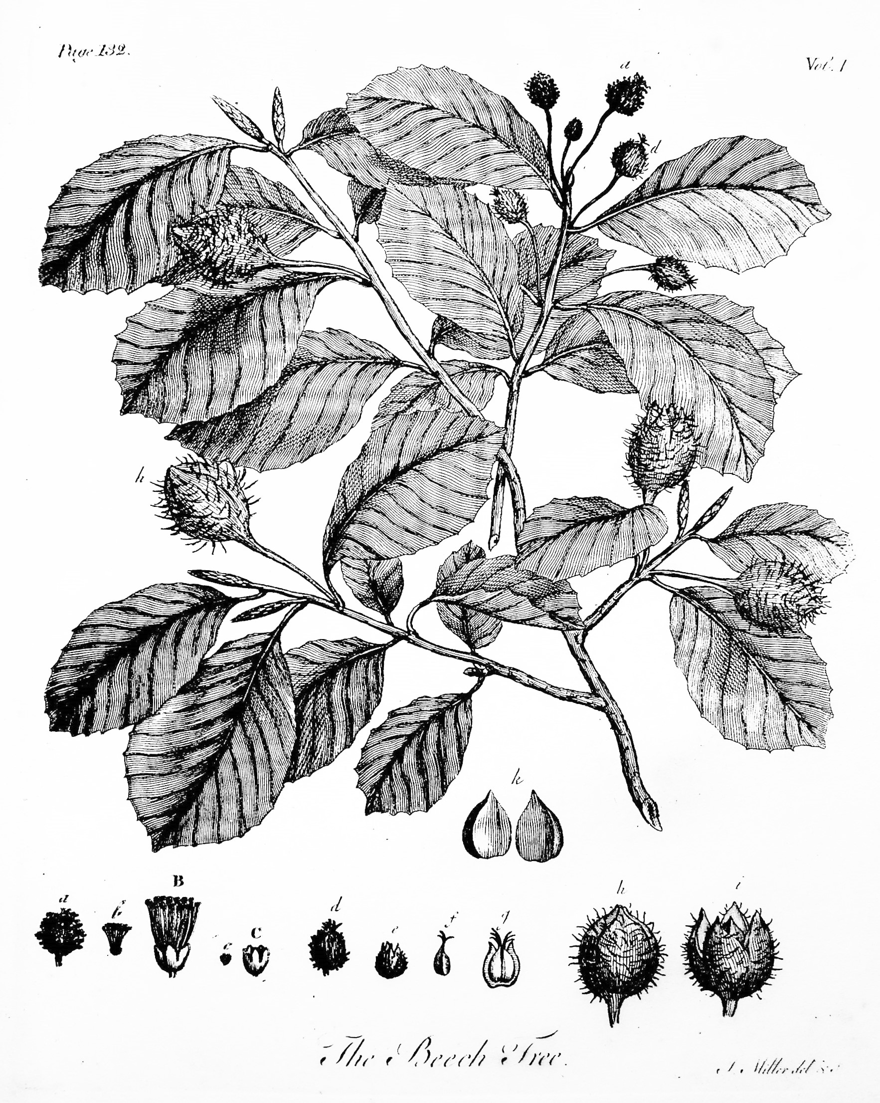 Image for Silva: Or, A Discourse of Forest-Trees, and the Propagation of Timber in his Majesty's Dominions TOGETHER WITH An Historical Account of the Sacredness and Use of Standing Groves, with notes by  A. Hunter