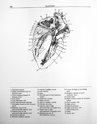 Atlas of Fetal Sectional Anatomy with Ultrasound and ...