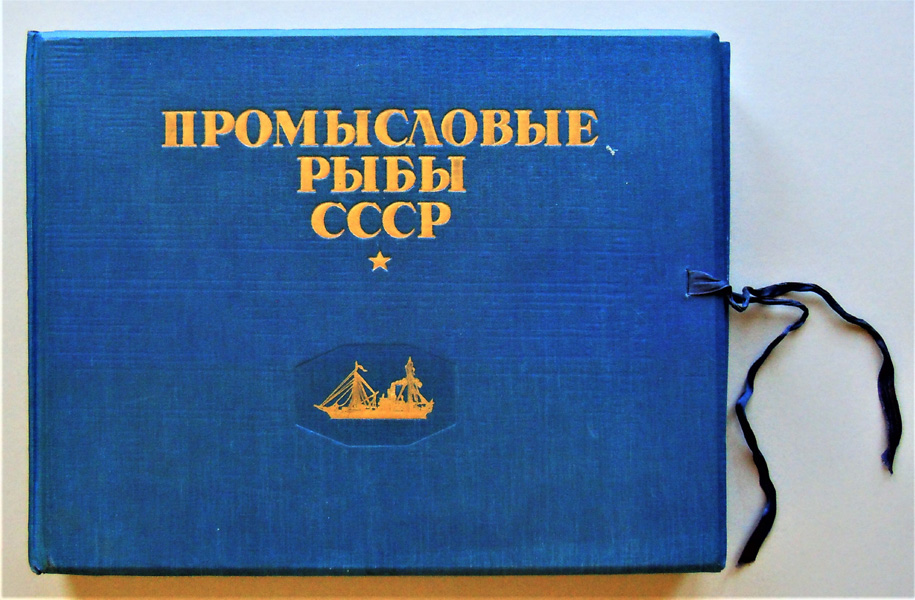 Image for Promyslovye ryby SSSR: Atlas risunkov [Commercial fish USSR: Color Atlas]