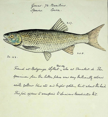Image for Handbook of the Freshwater Fishes of India: GIving the Characteristic Peculiarities of All the Species at Present Known, and Intended as a Guide to Students and District Officers