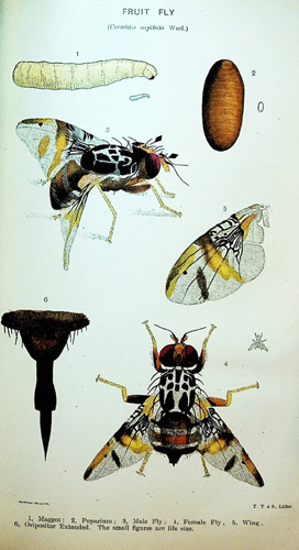 Image for Pamphlets on Insects, Injurious and Beneficial